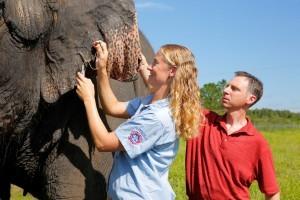"""ד""""ר שיפמן והווטרינרית ד""""ר אשלי סטלס מבצעים בדיקת דם במרכז רינגינג ברוס להצלת פילים. קרדיט צילום: Feld Entertainment, המרכז למדעי הבריאות באוניברסיטת יוטה"""