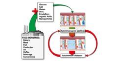 התהליך המקשר בין צריכת מזון מעובד להתפתחות של מחלות אוטואימוניות ולהחמרתן