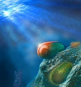 """ציאנובקטריה החיים בים או במים מתוקים מגינים על עצמם מקרינת אור עודפת ע""""י הפעלת חלבון הקרוטן הכתום (orange carotenoid protein – OCP). ה-OCP מופעל ע""""י אור חזק ומשנה את צבעו מכתום לאדום. התמונה מציגה שלושה תאים, האחד באור מלא (למעלה, צבע אדמדם), אחד בצל (למטה, צבע כתמתם) ואחד באמצע. במאמר הוצע מנגנון הפעולה של ה-OCP: אחרי הפעלה הקצה האמיני של החלבון """"חופר"""" לתוך קומפלקס האנטנה שנקרא הפיקוביליזום (Phycobilisome), וע""""י כך מונע זרימת האנרגיה אל מרכזי הראקציה. איור: איתי גולדשמיד"""