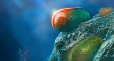 """באיור: ציאנובקטריה החיים בים או במים מתוקים מגינים על עצמם מקרינת אור עודפת ע""""י הפעלת חלבון הקרוטן הכתום"""