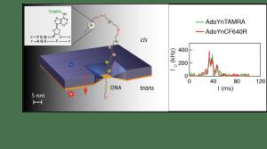 """משמאל: תרשים סכמטי של המערכת ושל מולקולות ה-DNA המצומדות למולקולה סינתטית ה""""מושכת"""" אותן דרך החור. מימין: דוגמא לאות האופטי (בשני צבעים) המעיד על רמת המתילציה"""