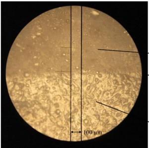 צילום של פני השטח של הסחוס לפני השחיקה (בחלק העליון) ואחריה