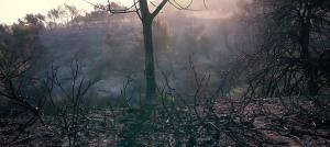 טיפוס מקומי – צילום מתוך הפרויקט של אדר שרף, מורן בריסקר וזהר ארני