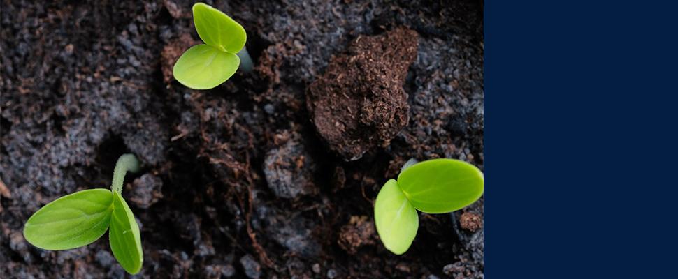 טכנולוגיה חדשנית שפותחה בטכניון צפויה להגדיל משמעותית תנובת גידולים חקלאיים