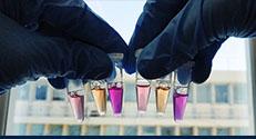 חיידקי E.coli מעבדתיים במבחנות המשמשים כמפעל לייצור חלבוני חישת אור. בסגול: חיידקים המבטאים הליורודופסין. צילום: אלינה פושקרב