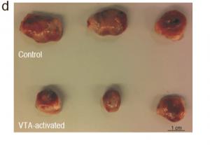 בשורה העליונה נראים הגידולים שהתפתחו בעכברי קבוצת הביקורת, ובשורה התחתונה - גידולים מעכברים שעברו את המניפולציה המוחית.