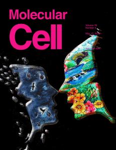 אילוסטרציה של כפל התפקידים של קספאז-3 – מוות תאי וחלוקת תאים - על שער Molecular Cell, באדיבות כתב העת