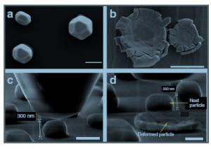 בצילום: מבחני דחיסה של חלקיקי ניקל, כפי שהם נראים במיקרוסקופ אלקטרונים סורק ברזולוציה גבוהה. a ו-c מציגים את החלקיקים לפני הדחיסה. b ו-d - אחרי הדחיסה