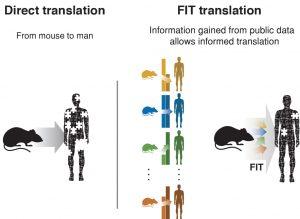 משמאל, המצב כיום: הסקת מסקנות ישירה מניסויים בעכברים, בלי התייחסות להבדלים בין המינים. מימין: אלגוריתם FIT לומד, מתוך מאות ניסויים קודמים בבני אדם ועכברים, את היחס בין רמות הביטוי של הגנים בשני המינים ומאפשר הסקת מסקנות יותר מושכלת בכל ניסוי חדש בעכבר
