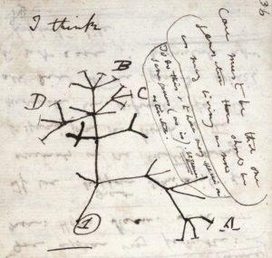 עצים מתארים אבולוציה. מימין: העץ האבולוציוני הראשון שצויר אי פעם בידי דרווין10