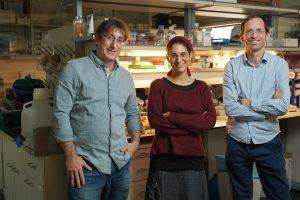 """תמונה קבוצתית (מימין לשמאל) : ד""""ר ישי פיקמן, הדוקטורנטית איילת אלפרט ופרופ""""ח שי שן-אור,"""