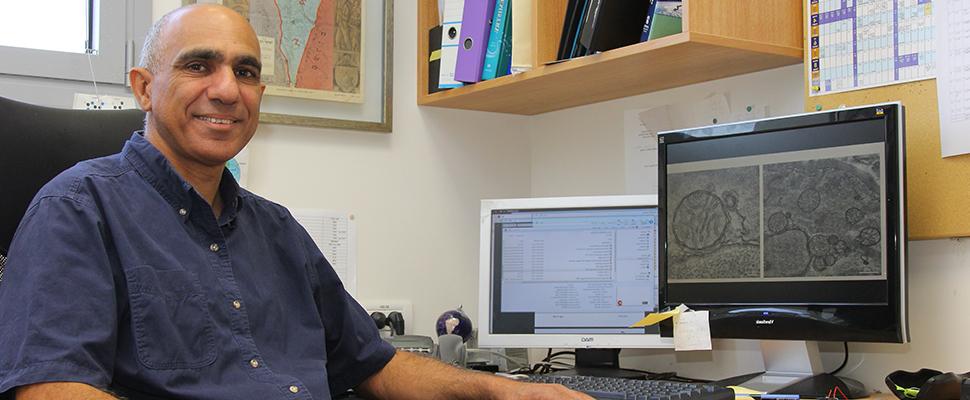 פרופ' יואב ערבה והדוקטורנט עפרי לוי מהפקולטה לביולוגיה חשפו מנגנון ויסות עצמי