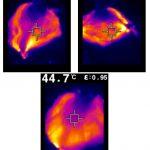 מפת חום (אינפרה-אדום) של מסכות מהסוג המוצע, בטמפרטורות שונות. האזורים החמים (צהוב ואדום) מעידים על כיסוי מלא של סיבי פחמן