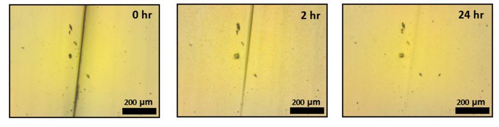משמאל לימין: איחוי עצמי של חתך ביריעת האלסטומר במהלך 24 שעות.