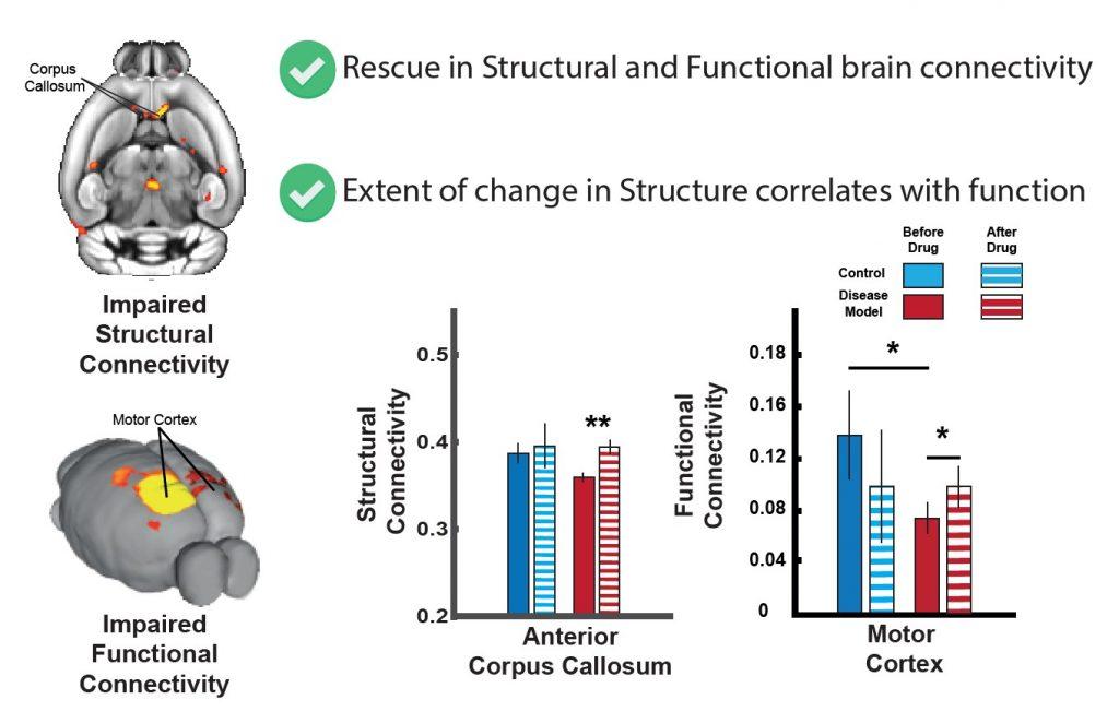 מפות הפגיעה המבנית במוח והפגיעה בקישוריות המוחית, והצלת החומר הלבן באמצעות טיפול ממוקד