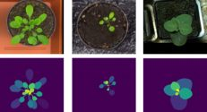 Fig. 1 – Artificial images of tobacco plants (right) and two Arabidopsis species (middle, left). The top row presents the artificial images, and the bottom row – the leaf masks. By creating a large quantity of artificial (synthetic) leaf images deep neural networks can be trained, thus providing for better leaf separation in real photographs.