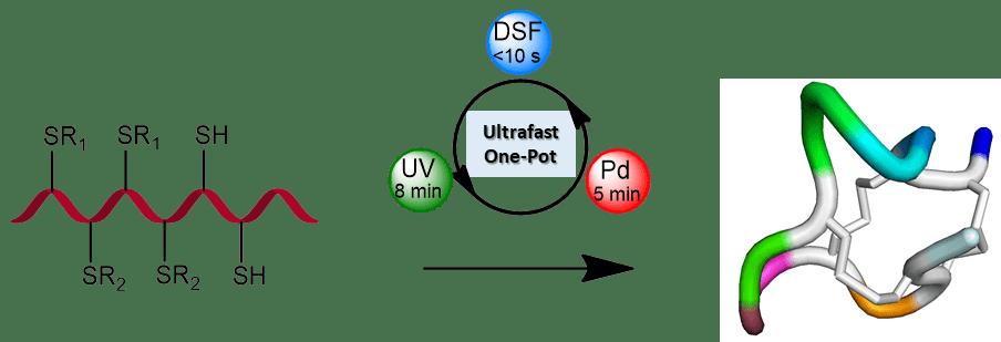 בתרשים: סגירה של שלוש טבעות שונות בחלבון באמצעות יצירה סלקטיבית ומהירה של קשרי גופרית-גופרית תוך שימוש חדשני באור אולטרה-סגול, פלדיום ומולקולת דיסולפירם (DSF)