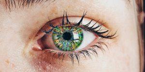 באיור: מודל של דינמיקת חידוש רקמת הקרנית על ידי תאי גזע הנמצאים בגבולה